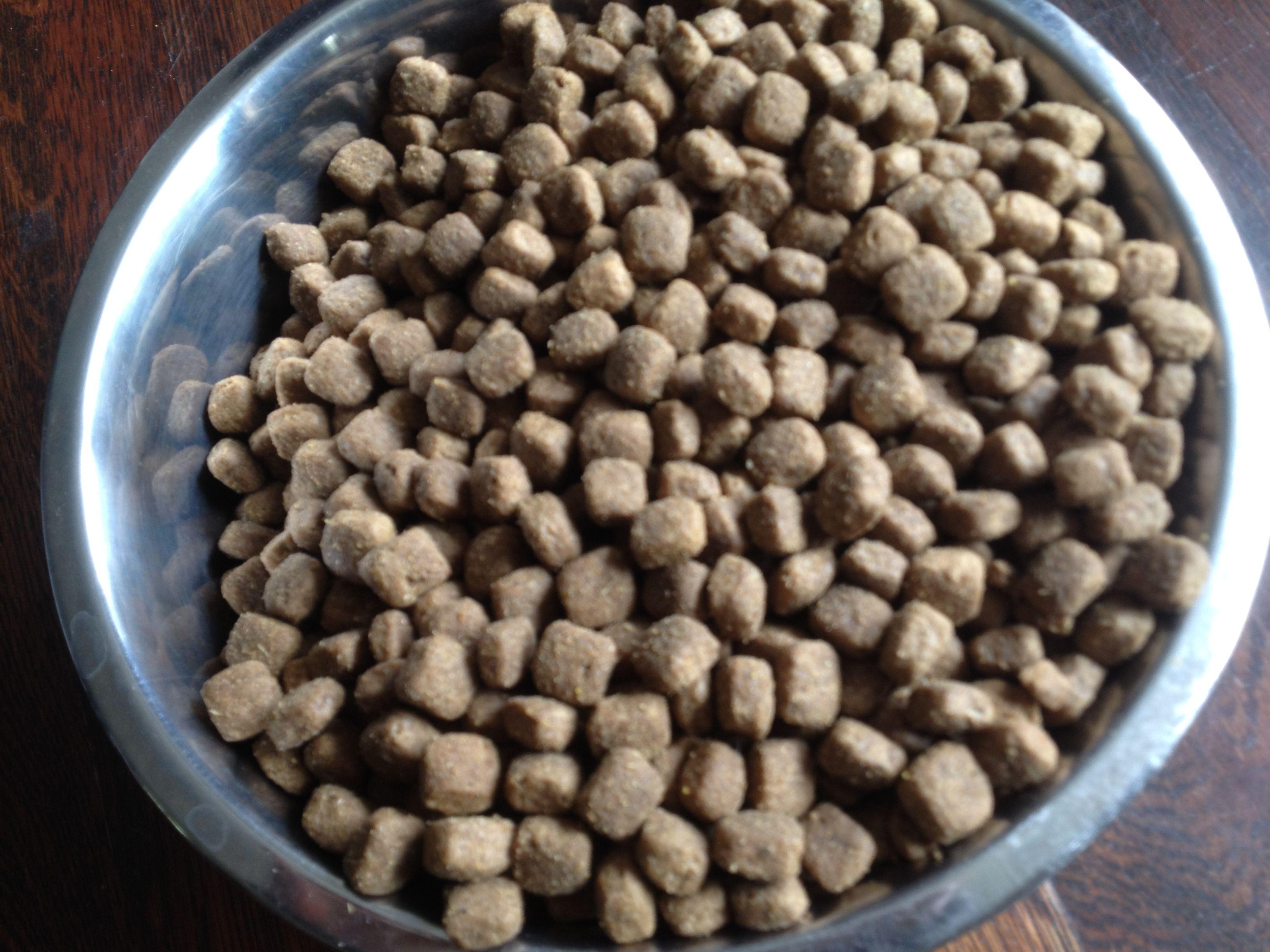 Hondenvoeding? Hoe kies je kwaliteit?